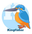 abc cartoon kingfisher vector image vector image
