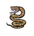 aggressive okinawa habu snake mascot vector image