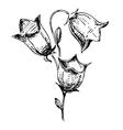 Bell flower sketch vector image
