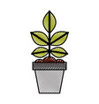 cultivated plant in pot