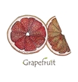 Red Grapefruit traced vector image vector image