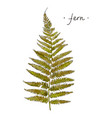 wild plant fern hand drawn in color vector image vector image