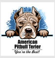 american pitbull terrier - peeking dogs - breed vector image vector image