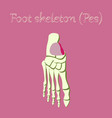human organ icon in flat style foot skeleton vector image vector image
