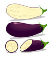 vegetable purple eggplant vector image
