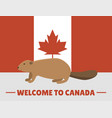 brown beaver animal character mammal on canada red vector image vector image