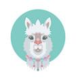 cute adorable alpaca or llama face vector image