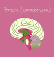 human organ icon in flat style brain vector image