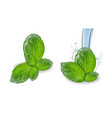 basil realistic leaf set collection water vector image vector image