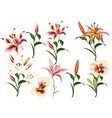 collection of realistic flowers of lilies vector image vector image