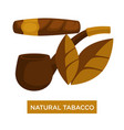 natural tobacco cigar and smoking pipe relaxation vector image vector image