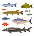 saltwater and freshwater fishes set fresh aquatic vector image
