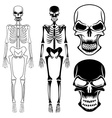set of skeletons and skulls vector image vector image