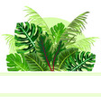 tropical jungle leaves background vector image