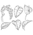 black and white tropical palm leaves and flowers vector image