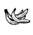 hand drawn black color sketch of banana on vector image vector image