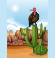 scene with vulture bird on cactus plant vector image vector image