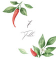 Watercolor hand painted red hot chili