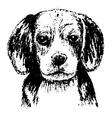 beagle head bw vector image