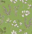 Seamless Pattern Herb Leaves vector image vector image