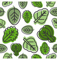seamless pattern vegetable leaves such as kale vector image