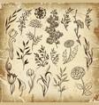 set plants doodle herbs vector image vector image