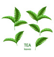 set realistic green tea leaves isolated green vector image