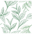 tea branch floral seamless pattern tea leaves vector image