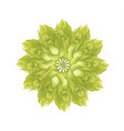 abstract hop flower plant 3d icon isolated vector image