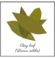 Bay leaves isolated on white top view vector image