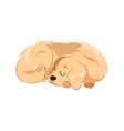 concept animal care and shelter pretty dog is vector image vector image