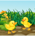 Two little ducks in the garden vector image vector image