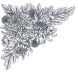 bouquet with hand drawn chrysanthemum vector image vector image