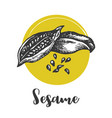 sesame seed drawing hand drawn food vector image vector image