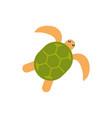 turtle animal cartoon australia icon on white vector image vector image