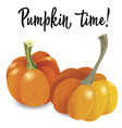 two orange pumpkin isolated on white background vector image vector image