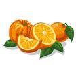 fresh sliced oranges vector image vector image