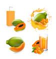 papaya juice set papaya fruit and package box vector image