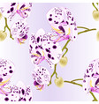seamless texture beautiful orchid dots vector image vector image
