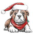Bulldog with red hat vector image