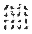 Collection of nature black bird wildlife vector image vector image