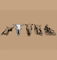 cow and bull skull set vector image vector image