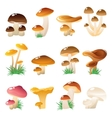 Forest Mushtooms Icon Set vector image