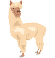 funny llama character cartoon vector image