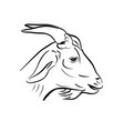 line art of goat head on white vector image vector image