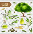 tea tree set vector image vector image