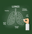 doctor draws with chalk anatomy human lungs vector image