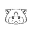 sketch of raccoons head portrait of forest animal vector image