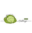 cabbage head cole simple vector image