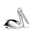 pelican bird sketch black and white hand drawing vector image vector image